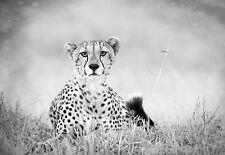 Framed Print - Black & White Leopard (Picture Wild Animal Lion Tiger Jaguar Art)