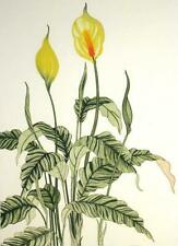 Arnold Iger, Spath Flower, Hand Signed Original Art Etching Floral Submit Offer!