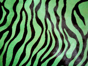"""Green Zebra Print Hair On Cowhide Leather Scrap 10.5""""x17"""" avg 1.8mm thick #6681"""