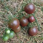 20 graines de tomate cerise noire de crimée bio