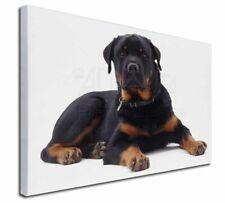 More details for rottweiler dog x-large 30