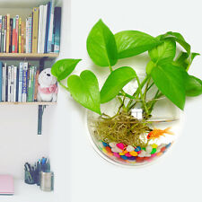 Creative Acrylic Wall Mount Hanging Fish Bowl Aquarium Tank Goldfish Plant Decor