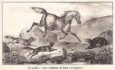 Antica Stampa fine 800 Il cavallo e i lupi - Emblema del genio e dei pedanti