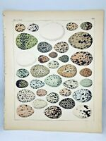 Antique large hand-colored print 1843.Oken's Naturgeschichte Plate 5 Nests Eggs