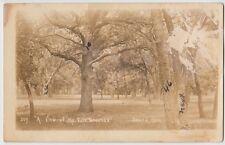 c1910 SEWARD Nebraska Nebr Real Photo RPPC Postcard FAIRGROUNDS Trees
