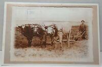 Homesteader  Fielding Saskatchewan Canada Vintage Postcard
