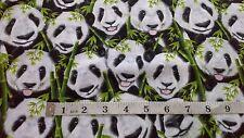 Panda Faces Fabric,100% cotton, Quilting, Timeless Treasures C5395