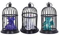 Nemesis Now Turquoise Amethyst Pearl Pet Dragon Locked in a cage Ornament Decor
