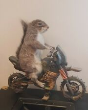 More details for taxidermy squirrel on a motorcycle
