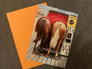 1  Happy Birthday Humor Horses In The Photo Booth Card With 1 Matching Envelope
