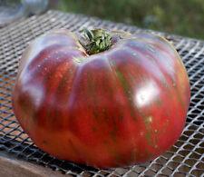 Pink Berkeley Tye Dye Heirloom Tomato Premium Seed Packet