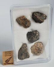 Meteorite NWA 13484