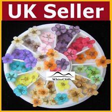 Dry Fiore Finte Nail Art Essiccato Unghie Brillantini Gemme VENDITORE UK