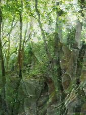 """MONTAGE PHOTO NUMERIQUE de HZEN tirage sur alu Dibond """"Forêt profonde"""", 30x40 cm"""