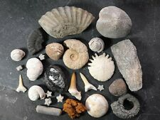 More details for fossil collection. ammonite shark tooth