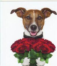 Klappkarte de luxe: Jack Russel - Terrier Chico als Partygänger