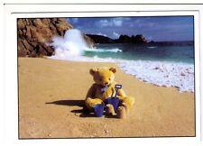 Postcard: Teddy enjoying a day on the Beach Holiday