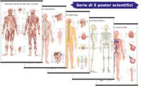 Sistema del Corpo Umano [Serie di 5 Poster Scientifici 67x100 cm] Belletti
