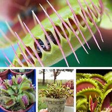 Rare Venus Fly Trap 40pcs Seeds Dionaea Muscipula Carnivorous Home Garden Plant