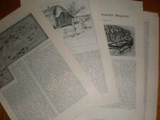 Two part article France Calvados 1884