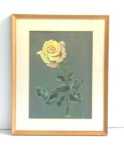 "Original Framed Water Colour ""Yellow Rose"" by Margaret Brough."