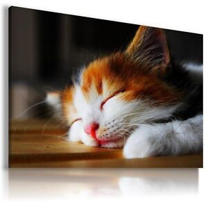 CAT KITTEN Domestic And Wild Animals Canvas Wall Art Picture Large Sizes  AN62 X