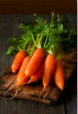 300+  Little Fingers Baby Carrot Seeds- NON GMO-Open Pollinated-Organic