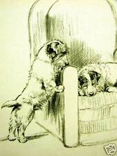 Barker Sealyham Terriers 1933 Dog Art Print Matted