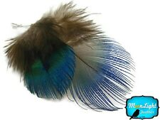 100 Pieces - Iridescent Blue Peacock Plumage Feathers Fly Tying Craft Supplies