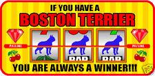 HAVING A BOSTON TERRIER ALWAYS A WINNER VEGAS STICKER
