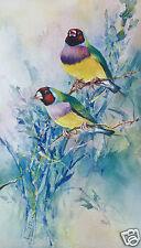 Gouldian Finches Print by Janet Flinn Limited Edition Asig Australian Bird Print
