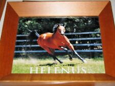 Helenus Action Photo of her in a Paddock Deep Wood Frame 31.5x26.5cm Excellent