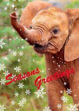 Elephant Seasons Greetings / Christmas Cards (pack of 6)