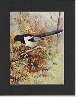 Magpie Mounted 1930s Bird Print Black Cream or White Mounts