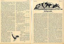 Geflügelzucht (... liegt in Deutschland noch tief im argen ) Plauderei von 1900