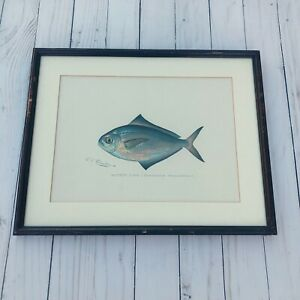Antique 1890s Donton Lithograph Print Butter Fish Framed