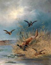 Nice oil painting fox catching Mallard wild ducks birds by river Hand painted