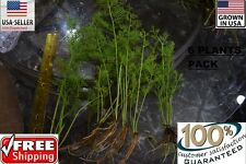6 bunches water sprite plants Easy Aquarium aquascaping planted tank low light