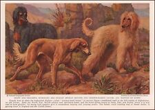 Afghan Hounds, Saluki Dogs by Edward Miner, vintage print, authentic 1937