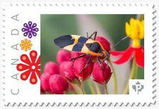 uq. YELLOW & BLACK BUG = Insects= Picture Postage MNH-VF Canada 2019 [p19-01s19]