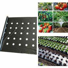Black Mulch Film 95x50m Flower Vegetable 5 Holes 0.03mm Gardening Seedling Plant