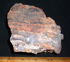 Fine Chunk Of Colorful Rainbow Petrified Wood, Ne Arizona, 200 Million Years