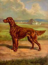1950s Vintage IRISH SETTER Dog Print Illustration Pet Print Gallery Wall 970