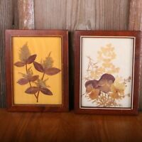 2 Pressed Leaves Photo Frame 7 by 9 Inch
