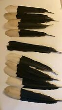 Hornbill feathers set of 11 feathers cruelty free,  10 available with discount