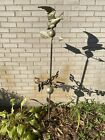 Rustic Wrought Iron and Zinc American Eagle NSEW Outdoor Weathervane Folk Art