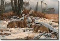 Windbreak Refuge Deer Wrapped Canvas by Rosemary Millette