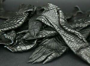 Single One Crocodile Paw Tanned Taxidermy Hide Craft Supply Black