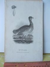 Vintage Print,BUSTARD,Rural Sports,Bunney+Gold,1801