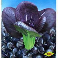 PAK CHOY, PURPLE CROWN, Asian Vegetable, 100 seeds 紫冠一号